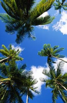 Palm trees flowing lazily in the wind are a hallmark of coastal regions and palms stretching past 50 feet tall seem to withstand both wind and salty conditions year after year with little care. Palm Tree Care, Palm Trees, Planting Seeds, Palms, Stretching, Coastal, Clouds, Gardening, Water