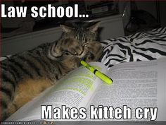 Law school makes kitteh cry