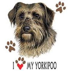 A personal favorite from my Etsy shop https://www.etsy.com/listing/225293872/yorkipoo-dog-tee-shirt-i-love-my
