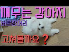강아지 깨무는 버릇을 고쳐보자! - 무는 강아지 정신 번쩍들게 하는법, 깨무는 강아지 훈련 - YouTube
