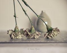 Flower Photography Carnations Still life by KateRyanFineArt