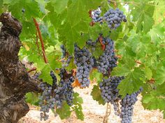 amador county, ca-really great small vineyards/wineries