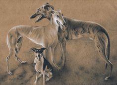 """Toby, Kylee, Skeeter"" - colored pencil on brown paper Greyhound Art, Italian Greyhound, Greyhounds, Etchings, Brown Paper, Whippet, Dog Art, Colored Pencils, Kangaroo"