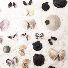 West coast bounty.  #seashells #beachcombing #butterfly #westcoast #sandiego #sandiegoconnection #sdlocals #sandiegolocals - posted by Pallas https://www.instagram.com/lonelyghostv. See more post on San Diego at http://sdconnection.com