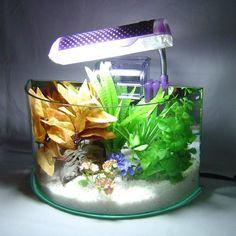 Amazon.com : Bowfront Aquarium w/ Light & Filter : Pet Supplies
