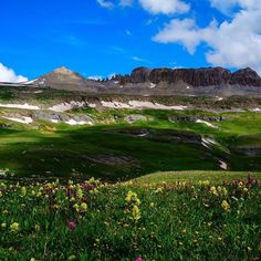 Summer is a great time to see Colorado's finest display of wild flowers (near Durango, Colorado of course :))