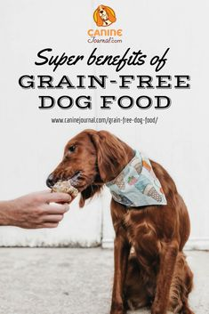 Can Dogs Eat Yogurt, Healthy Dog Food Brands, Healthy Food, Dog Growling, Grain Free Dog Food, Dog Nutrition, Dog Care Tips, Homemade Dog, Dog Owners