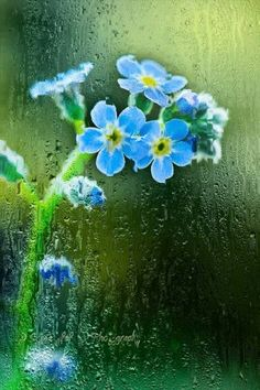 Raining On Blue Flowers
