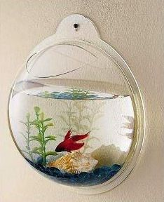 Add some life to a room...literally! Hang a mini fish bowl on the wall.