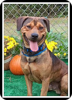 Act quickly to adopt. Pets at this Shelter may be held for only a short timeMarietta, GA - German Shepherd Dog Mix. Meet COSMOS a Dog for Adoption.