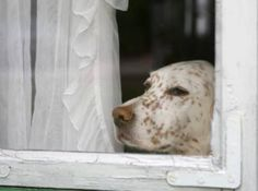 Petplan pet insurance Co-Founder Natasha Ashton offers advice on helping pets who suffer from thunderstorm anxiety in her latest column for The Huffington Post Pet Insurance Reviews, Pet Health Insurance, Best Pet Insurance, Life Insurance, Fire Safety Tips, Cheap Pets, Separation Anxiety, Healthy Pets, Fauna