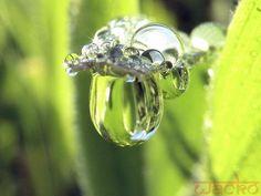 Drop of dew - Pixdaus