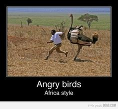 Photo of Angry Birds Funnies! for fans of Angry Birds 28005852 Angry Birds, Funny Cartoons, Funny Jokes, Hilarious, Dog Jokes, Funny Kids, The Funny, Hawke Dragon Age, Dragon Age 2