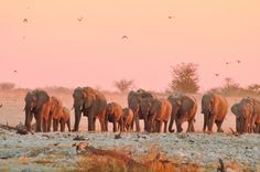 Africa Overland Tours: South East Explorer, Cape Town to Nairobi Nairobi, Cape Town, Elephant, Africa, Tours, Explore, Painting, Painting Art, Paintings