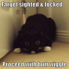 Target sighted & locked