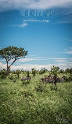 A full day private safari really enhanced our experience of Kruger National Park.