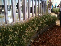 grassen langs de gevel