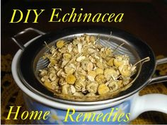 Making echinacea diy tincture ,tea ,capsule and fomentation - Improving your life health and family