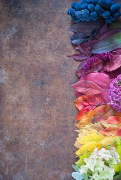 "syflove: ""fall color """