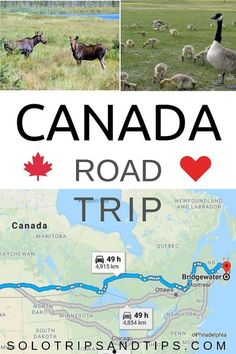 Canada road trip map for your cross country driving journey. Budget your travels and enjoy a vacation in Canada roadtrip canada vacationsideas 361132463866922607 Road Trip Map, Road Trip Destinations, Road Trip Hacks, Calgary, Travel Maps, Solo Travel, Ways To Travel, Places To Travel, Cross Canada Road Trip