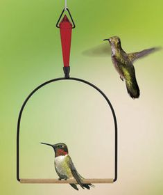 Delight in watching these tiny marvels swing on the Jeweled Hummingbird Swing. Yes--they really do swing on it! Just hang it near their feeder. Hummingbirds are territorial and will perch on the swing to watch over their food source. The red jewel that's