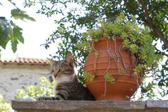 If you're looking at names for your new kitten, Greek cat names are a beautiful, unique choice. We've pulled together many beautiful ideas for inspiration. Free Images, Greece Country, Beautiful Vacation Spots, Greek Names, Cat Names, City Streets, Culture Travel, Island Life, Animales