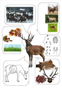 Kindergarten Activities, Preschool, Nature Study, Montessori, Little Ones, Moose Art, Teaching, Education, Inspiration