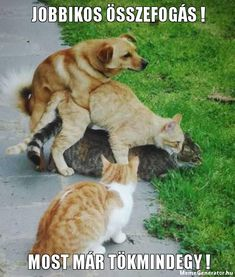 15 Hilarious Pictures : Good Luck Not Laughing Funny Animal Videos, Cute Funny Animals, Animal Memes, Funniest Animals, Unusual Animal Friendships, Unusual Animals, Best Funny Pictures, Funny Photos, Dark Sense Of Humor