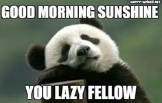 Having a bad morning? Each good morning meme in this collection can surely brighten up your day- we promise! Good Morning Beautiful Text, Good Morning My Love, Good Morning Sunshine, Good Morning Everyone, Bad Morning, Morning Memes, Funny Good Morning Quotes, Happy Morning, Good Morning Greeting Cards