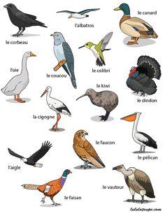 Fiche gratuite à imprimer, les oiseaux