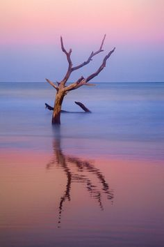 Tree in Wet Sand, Hunting Island State Park, SC