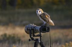 Barn owl sitting on a camera Photo in Album One - Photographer: PT Discovery