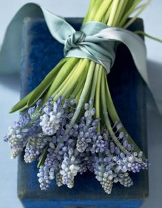 Muscari tied with ribbon