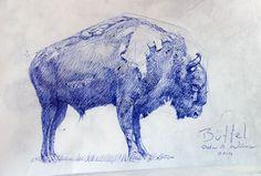 Buffel #pen #drawing
