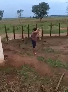 This beast will never sit on a chain Animals And Pets, Funny Animals, Panda Gif, Animal Fails, Fail Video, Awkward Moments, Funny Animal Videos, Funny Fails, Funny Texts