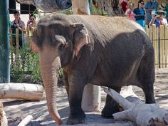 Happy Birthday to Indu  from the Phoenix Zoo