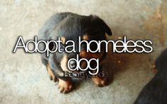 Bucket list - adopt a homeless dog