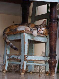 Chat sur chaise. M'évoque les chats de ma grand-mère, dans un décor fruste.