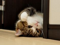 I need to introduce you a cute cat - Maru!! His specialty - How to deal with different kinds of boxes! Must make you laugh :)