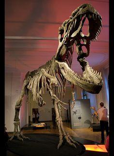 #Giganotosaurus #dinosaur #theropod