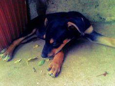 Day 8. My dog :) ''Morita''