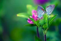 фото зеленый цвет красивые картинки: 20 тыс изображений найдено в Яндекс.Картинках