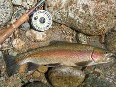 California Heritage Trout Challenge, Going to try and do this!
