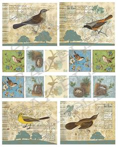 Vintage birds Collage Sheet 99b by siefert2 on Etsy, $2.99