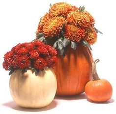 Pick your best pumpkin and have your carving tools to the ready -- it's Halloween! Whether you want to go spooky or goofy, we have tons of Halloween pumpkin ideas for you to choose from and tips on how to safely carve a pumpkin. Pumpkin Planter, Pumpkin Vase, Pumpkin Flower, Pumpkin Centerpieces, Thanksgiving Centerpieces, Pumpkin Carving, Thanksgiving Table, Christmas Centrepieces, Large Pumpkin