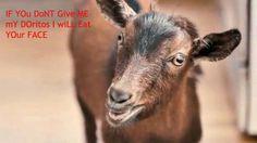 Superbowl goat
