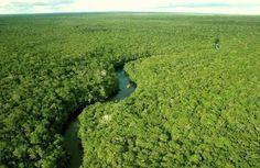 A Amazônia Por Dentro