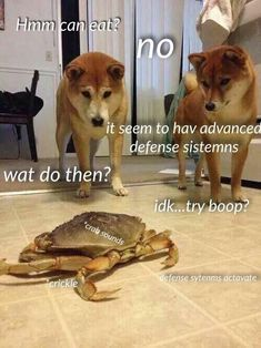 These 14 Clean and Funny Animal Memes are meant to make your day. Sit back & enjoy a laugh with these funny animal memes from some of ur favorite creatures and critters! Cute Animal Memes, Animal Jokes, Cute Funny Animals, Funny Animal Pictures, Cute Baby Animals, Funny Cute, Hilarious, Clean Animal Memes, Funny Puppy Memes