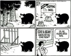 animals, bears, sad truths