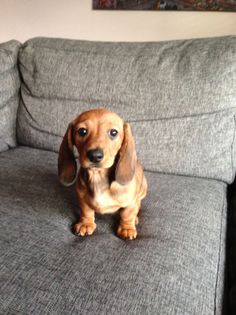 Sometime in the past two years, I became fairly obsessed with dachshunds. Hot dogs, wiener dogs, whatever you want to call them. Unpopular Opinion, Animal Rescue, Dachshund, Hot Dogs, The Past, Pets, Animals, Animales, Animaux
